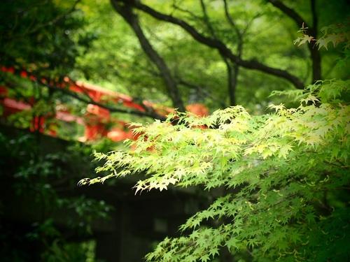 momiji_2.jpg