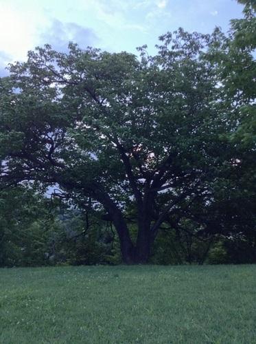 my favorite tree_1.JPG