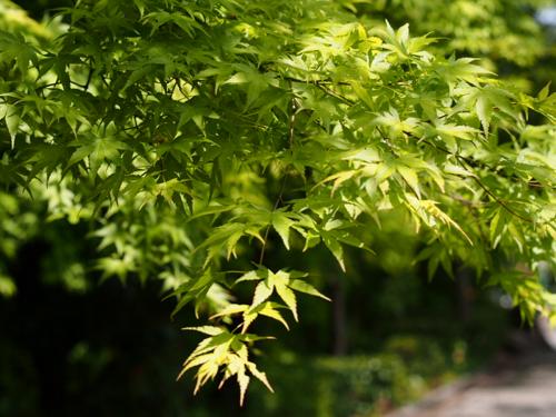 tender green.png